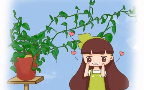 黃金葛葉子藏有小機關,教你一招,呼呼冒芽長滿盆!