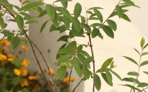這些原生植物,是最適合在花園中應用的材料(上)