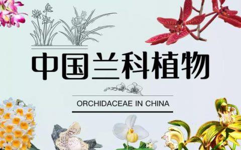 林草科普|蘭文化