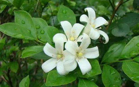 在庭院里種幾樣「活香水」,花開時節滿院飄香!~