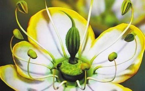 一朵1500萬年前的花,能讓我們接近花朵演化的真相嗎