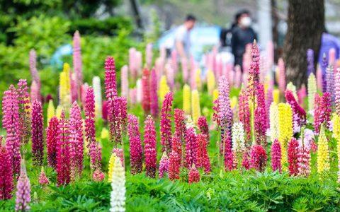 連香樟樹都開花了上海植物園的花還會少么?
