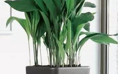 那些常見的家庭耐陰植物,沒有陽光也能養好花