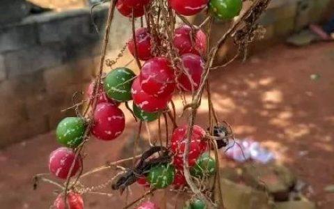 全球最奇特的植物,你可能1種都沒見過