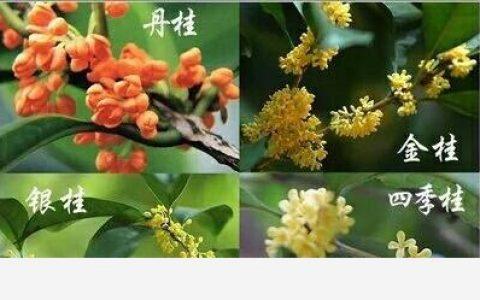 中國十大香花植物,陣陣芳香襲來