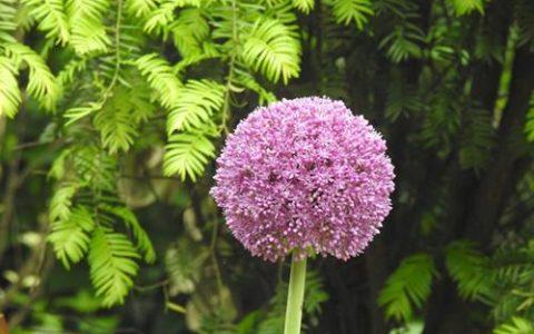 原創|五月還有這些花,你見過嗎?