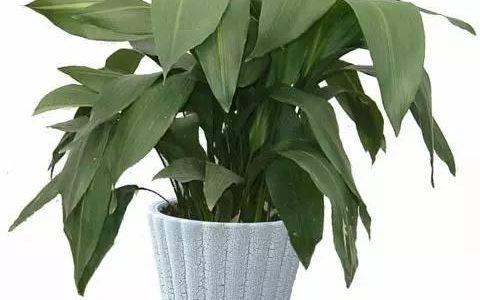 精選的9種家庭耐陰植物,形態各具特色