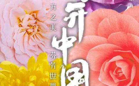 聚焦中國花卉之美,國內首部自然園藝類紀錄片《花開中國》將播