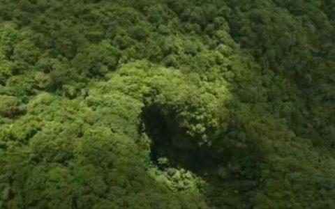比大熊貓還珍稀的極危植物 消失百年後從天坑「歸來」