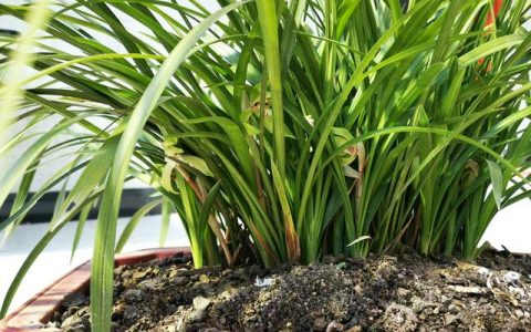 蘭花怎麼養才能旺盛?蘭友:利用土肥水光風,養蘭就容易了