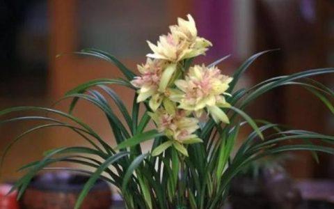 養蘭花要學會「觀察」,發現葉片上的5個「求救信號」,及時施救