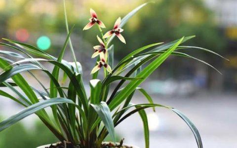 養蘭花少不了這4種「小東西」,家中要常備,養好蘭花很簡單