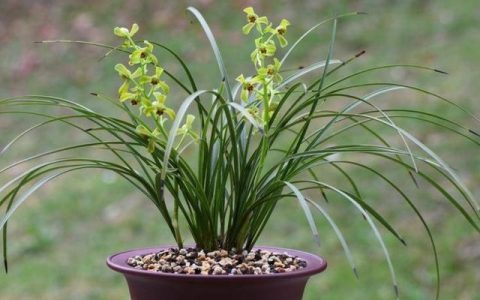蘭花不發新芽,4個方面處理好,很快冒出粗壯芽