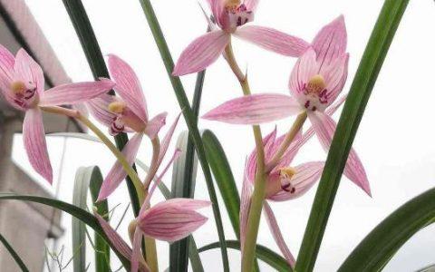 家裡養蘭花,做好這4點,想養死都難