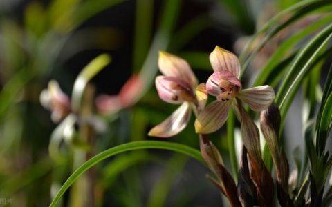 蘭花好不好,五個特徵「有目共睹」,若你的苗符合,值得炫耀
