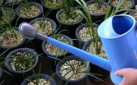 摸透蘭花3「喜好」,葉片油綠,花箭竄老高,養出「極品」好蘭花