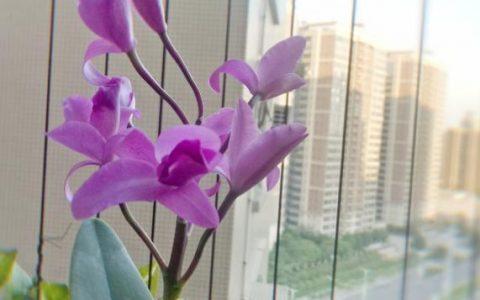 6種珍稀蘭花,高貴優雅、價值不凡,見過一種就很厲害了!