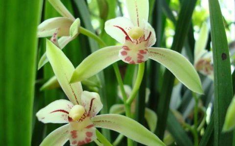 蘭花栽種的3個技巧,大大提高成活率,竄箭快,開花多