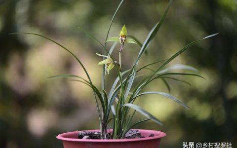 適合新手蘭友的養蘭心得系統整理,從瞭解蘭花開始