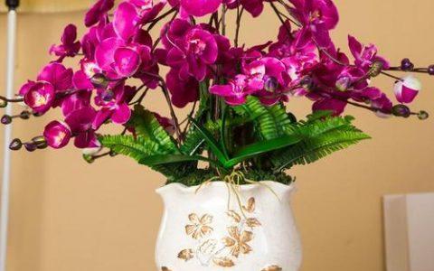 5種「名貴」蘭花,春節開的「最美」,一屋子香氣,一屋子驚艷