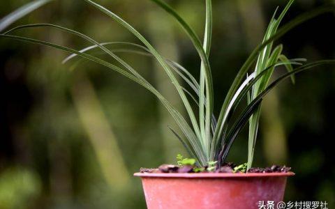 新手如何種植蘭花?從配製植料開始,一小時就能學會