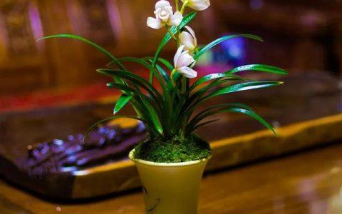 曾經天價的8種蘭花,如今跌落神壇,普通人也買得起