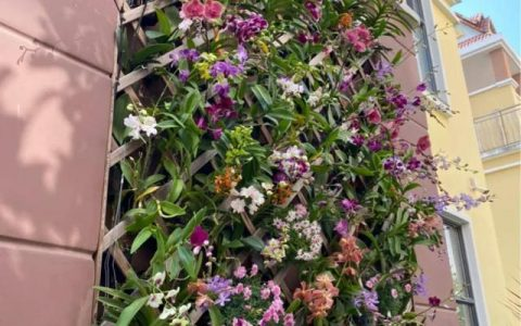 10種名貴蘭花,春節養最美,花一開滿屋子香氣