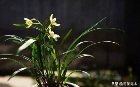 蘭花養護|一位有著30餘年萟蘭經驗的蘭友經驗分享