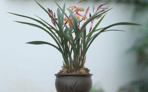 養蘭花「講究大」,放對「位置」,誰養都省心,葉片油綠嗖嗖開花