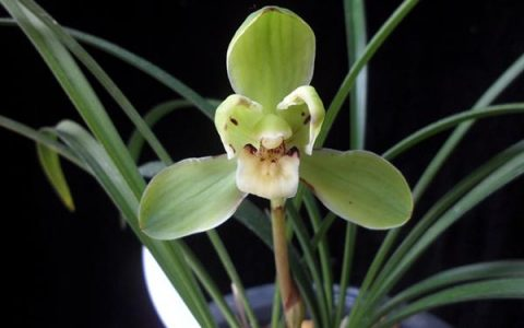 據說看完這14個蘭花品種 99%的蘭友都想買