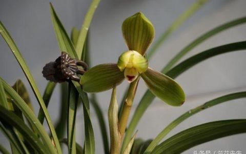 看完這13個蘭花品種 終於知道蘭花為什麼這麼值錢了