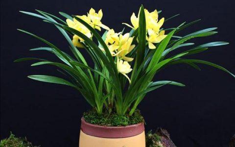 家中养兰花,掌握好6个养护细节,长得健壮姿态美